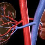 Обострение хронического пиелонефрита: симптомы, лечение, диета и профилактика