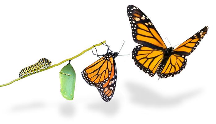путь к трансформации личности