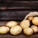 Картофель Лорх: описание, особенности выращивания, фото