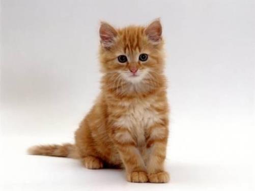 котенок питер