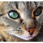 Как нарисовать кошачьи глаза карандашом?