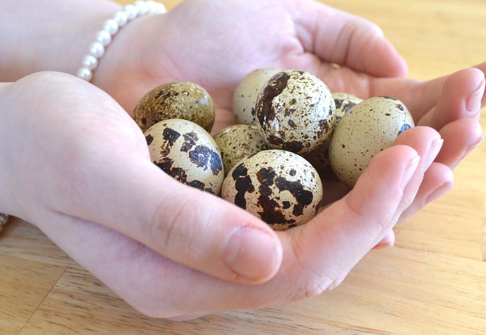 Перепелиные яйца в прикорм детям