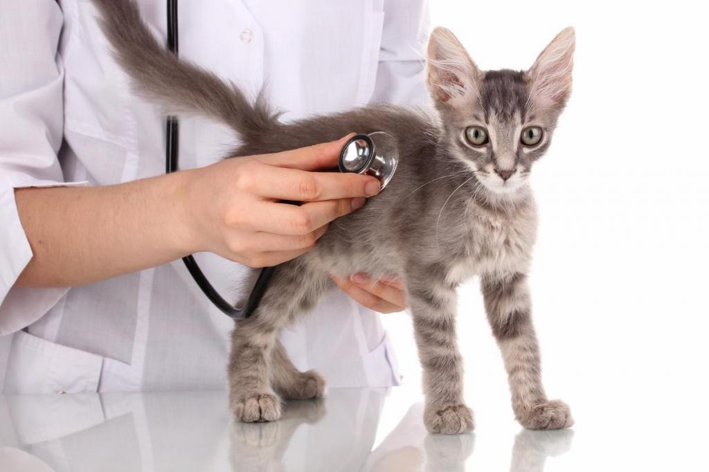 у кота рвота желтого цвета лечение