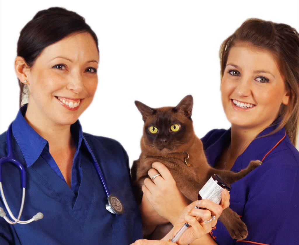 Кошка и доктора