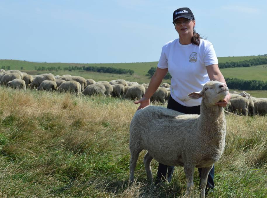 Породы овец и баранов