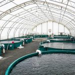 Разведение рыбы в УЗВ: преимущества, оборудование и нюансы