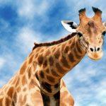 Совсем не детская загадка, о том как засунуть жирафа в холодильник