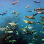 Обитатели Балтийского моря: виды и описание, среда обитания, фото