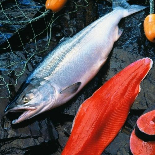 Ценный лосось