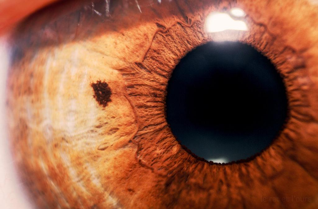 нервы в глазу