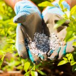 Что такое минеральное удобрение: основные виды, состав, норма внесения
